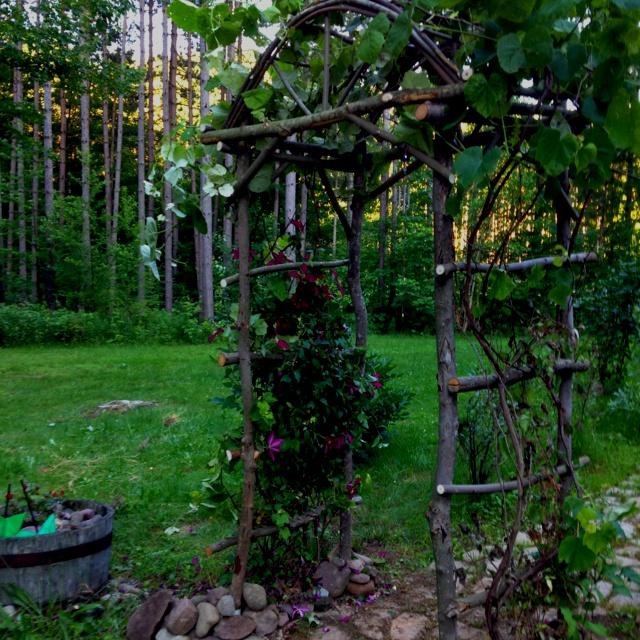 1000+ Images About Garden ::: Growing Grapes On Pinterest