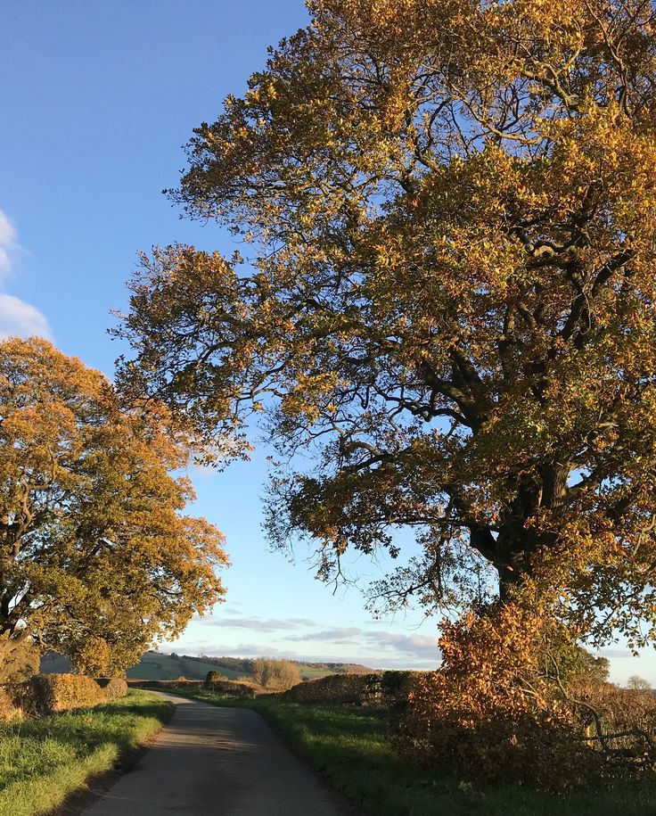 An autumn walk down the lane from our B&B to the spooky Hopton Castle! #autumn #autumnleaves
