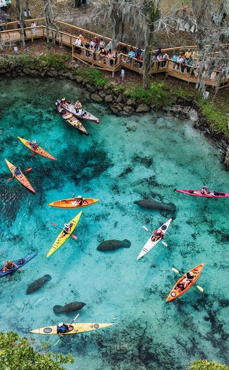 Three Sisters Spring | Travel | Vacation Ideas | Road Trip | Places to Visit | Crystal River | FL | Water Sports | Zoo | Natural Feature | Scenic Point