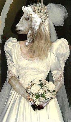 Von Lady Bride am meisten