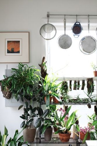 Plants For Kitchen To Decorate It: 123 Best House Plants Images On Pinterest