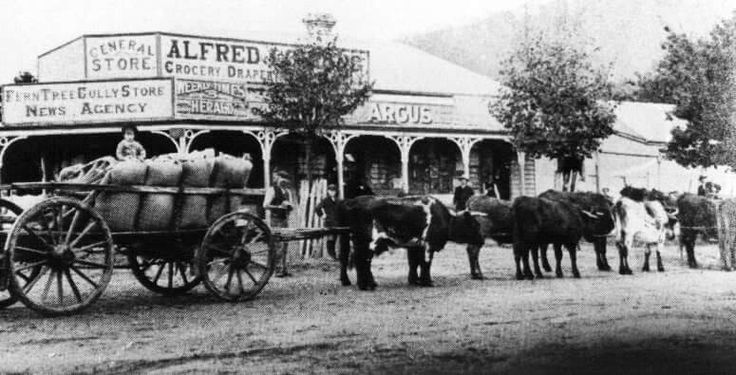 Lording's store  Ferntree Gully.  Vic.