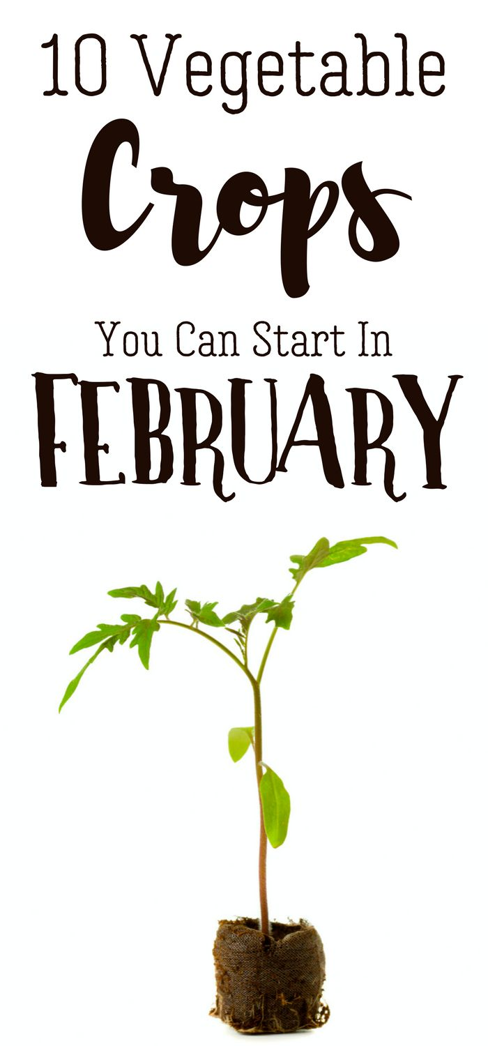 It's not quite spring yet. but you're ready for gardening season, right? Here's 10 crops you can start from seed in February to scratch the itch! Pampered Chicken Mama | Backyard Chickens, Homesteading, Off Grid Living