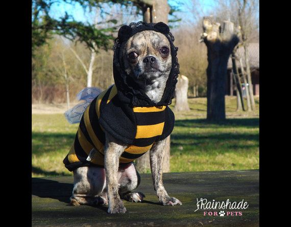 Ehi, ho trovato questa fantastica inserzione di Etsy su https://www.etsy.com/it/listing/505741891/costume-da-ape-per-cani-felpa-apetta