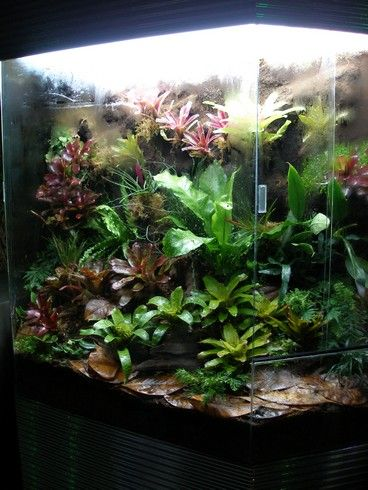 living terrariums...list of plants to use!