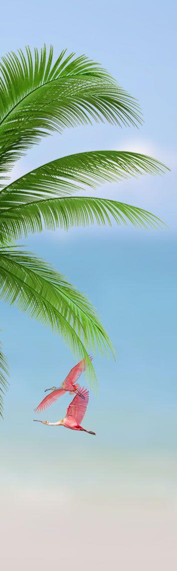 Florida + Port Charlotte + Beach + Palm + Pink Flamingos + Wild +Paradise