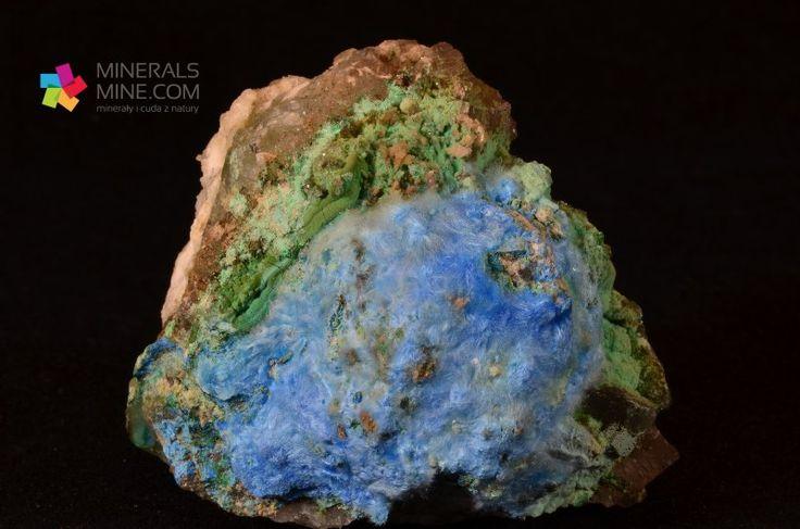 Ładne igiełkowe kryształy niebieskiego Cyanotrichitu w otoczeniu zielonego brochantytu Pochodzenie: Qinglong, Guizhou, Chiny Wymiary: 4.8 x 4.6 x 4.0 cm Waga: 136 g Wzór chemiczny: Cu4Al2SO4(OH)12 • 2H2O