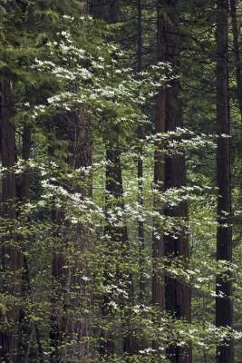 1000 Images About Trees And Plants That Grow In Sc On