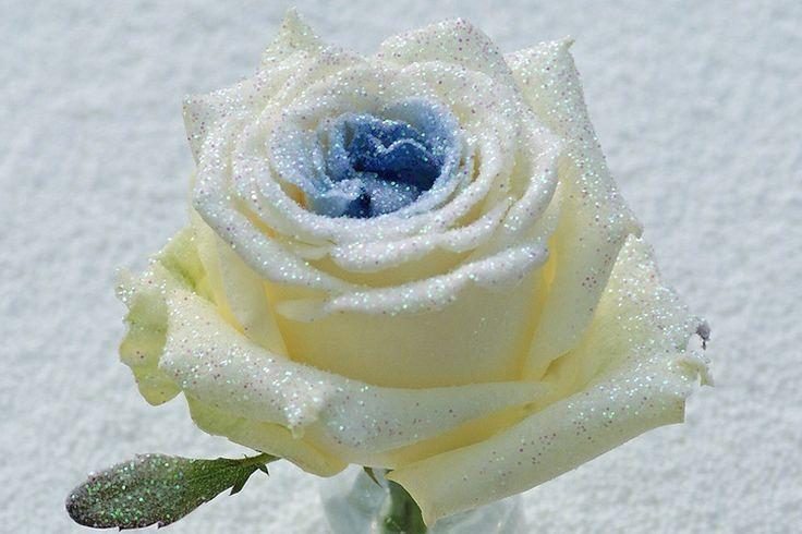 Blauwe rozen Bling bling! http://www.regioboeket.nl/vip-roses/product/bling-bling/bling-bling-blauwe-rozen