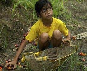 Olio di palma, Amnesty: le multinazionali sfruttano lavoro minorile e forzato «  Help Consumatori