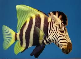 Thou shall have a fishy on a little dishy thou shall have a fishy when the 3Rs boats come in    Kulkarni P Yellanki S Medishetti R Sriram D Saxena U Yogeeswari P. Novel Zebrafish EAE model: A quick in vivo screen for multiple sclerosis. Mult Scler Relat Disord. 2017 Jan;11:32-39. doi: 10.1016/j.msard.2016.11.010.  INTRODUCTION:  METHODS:  RESULTS:  DISCUSSION:  Highlights  Zebrafish develop EAE  Zebrafish EAE is treated with MS DMT  You don't need to use mice or larger animals to look for…