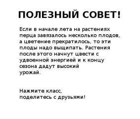 (3) Одноклассники