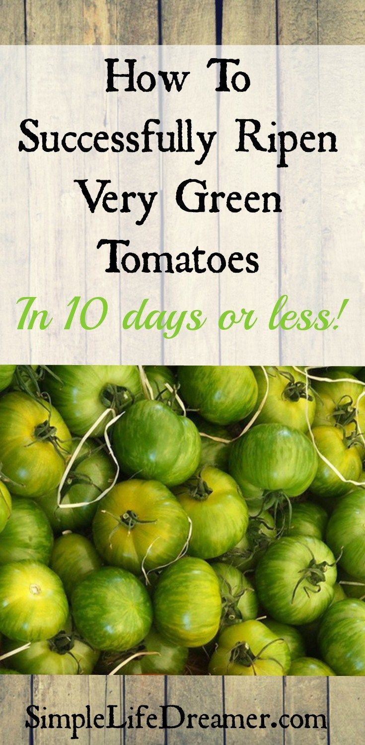 How To Successfully Ripen Very Green Tomatoes