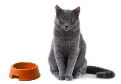 grey cat with bowl istockphoto