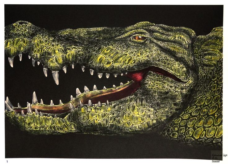 Tim Jeffs -  Intricate Ink Animals in Details volume 1   Alligator  Coloured with Aihao pencils