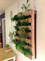 Arredare con le piante: tante idee per una casa green e originale!