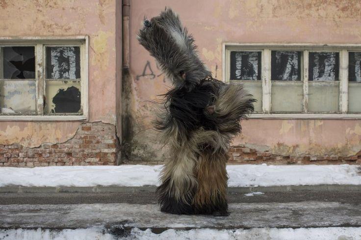 """Haar Wars  (29.1.2017)      Passt alles? Ein Kukeri-Tänzer überprüft den Sitz seines Kostüms. Er nimmt am Maskerade-Festival """"Surva"""" im bulgarischen Pernik teil, wo mit Volksmusik und traditionellen Tänzen das neue Jahr gefeiert wird. Mit ihrer Verkleidung und Glocken versuchen die rund 6000 Teilnehmer, das Böse zu vertreiben. Die Kukeri-Tradition hat es aus Osteuropa gerade nach Hollywood geschafft: Ein entsprechendes Kostüm ist in der Komödie """"Toni Erdmann"""" zu sehen, d..."""