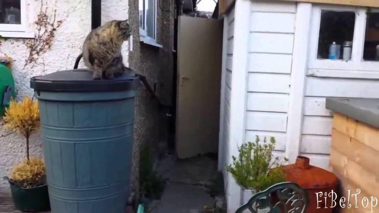 Funny Crazy Cats 2016 #9 | Смешные Сумасшедшие Кошки 2016 #9