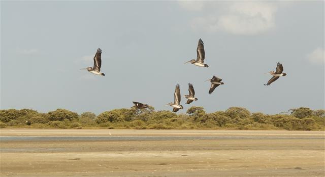 Vuelan las aves en Riohacha #Guajira.