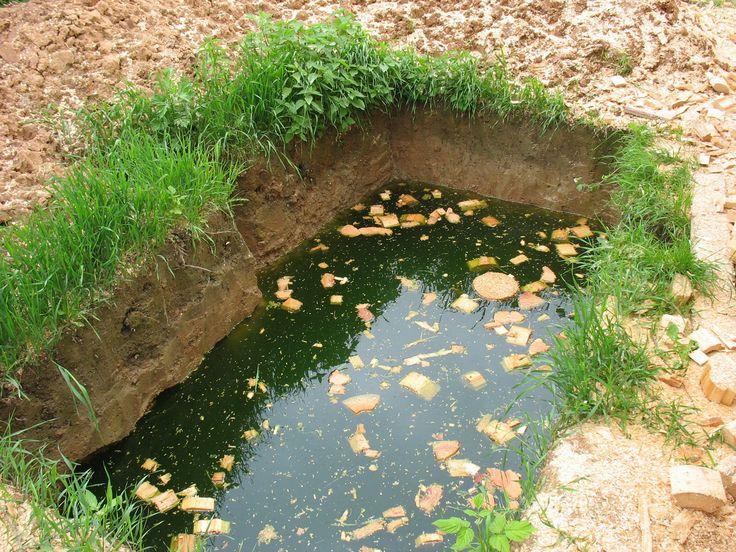 Что делать, если близко грунтовые воды.  Как и с чего начать сад трудных для садоводства местах – болотах, оврагах, с грунтовыми водами и неплодородными почвами.Чаще всего нам достаются не до конца осушенные болота или вырубки. Иногда на склоне или даже в овраге. Такие участки наиболее проблемные, и я постараюсь вам предложить решение для их изменения к …