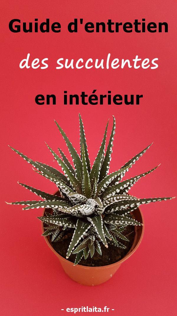 Information d'entretien des succulentes en intérieur