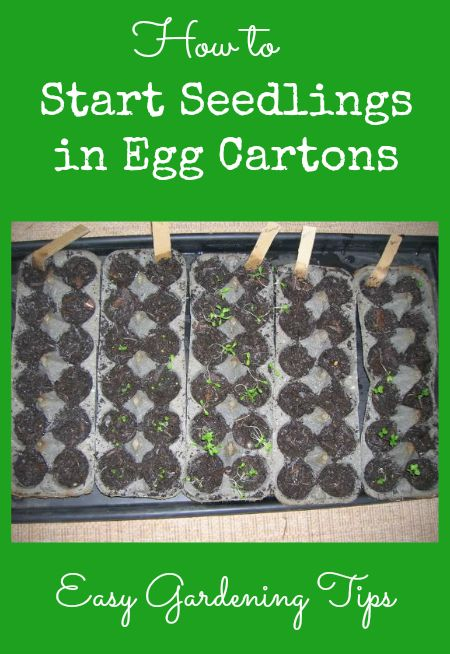Easy Gardening Tips - How to Start Seedlings in Egg Cartons