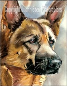 My sudden obsession with vintage dog art! - American Akita GSD Dog Art Print of Watercolor Painting Judith Stein Signed