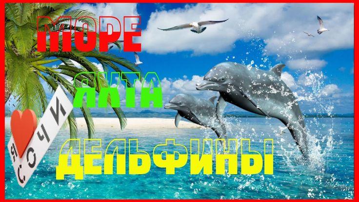СОЧИ - МОРЕ - ЯХТА - ДЕЛЬФИНЫ | SOCHI SEA YACHT DOLPHINS. Отдых СОЧИ 2016