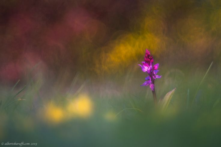 The last rays of sun by Alberto Baruffi on 500px