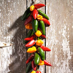 How to Dry Chili Peppers  Savor a Southwestern tradition by making a chili ristra—colorful strings of dried chili peppers. Learn how to dry chili peppers using these easy tips.  Instructions @ http://www.tasteofhome.com/Recipes/How-To-Cook/How-to-Dry-Chili-Peppers