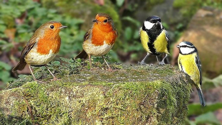 Videos for Cats to Watch - Birds in The Secret Garden