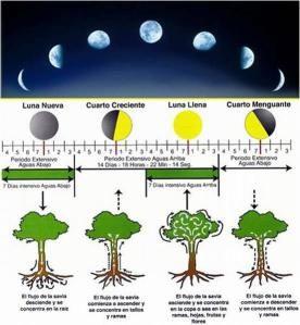 influencia lua na planta
