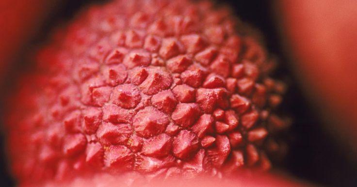 Como cultivar lichias desde a semente. As lichias são frutas nativas do sul da China. É uma fruta redonda, cresce de uma árvore com delicados membros e tronco. As folhas são largas e coriáceas e dividem-se em oito folhetos. A casca da fruta é espinhosa e vermelha, com uma delicada fruta branca dentro dela. A semente dentro da porção comestível da fruta varia de tamanho entre as ...