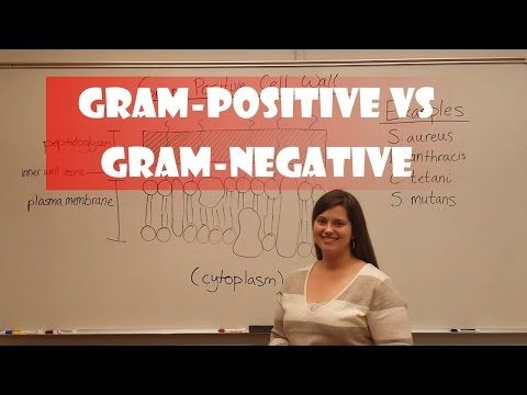 Gram Positive Bacteria vs Gram Negative Bacteria - YouTube