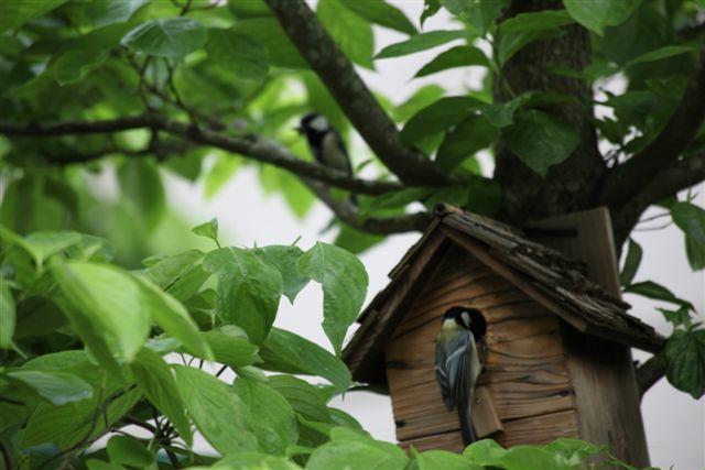野鳥の巣箱 餌台 バードフィーダー バードハウス| 木箱屋ドットコム