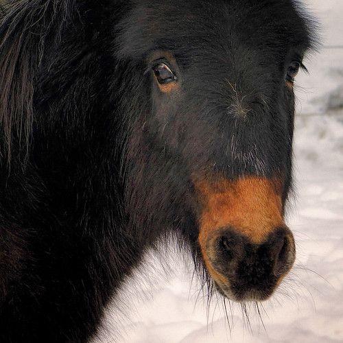 Accidental portrait - #18-55mm #5 #accidental #alps #animal #Austria #black #brown #CloseUp #creature #Crop #EDIT #Eye #Eyes #face #für #hair #haircut #hairstyle #horse #kit #Lens #lightroom #look #maistora #ne-5 #nex #Nik #nose #orange #Pony #portrait #post-process #Process #pse #resort #scheffau #sel1855oss #snow #sony #species #square #Topaz #tyrol #village #winter #winterhairstyles #yard #ZOOM