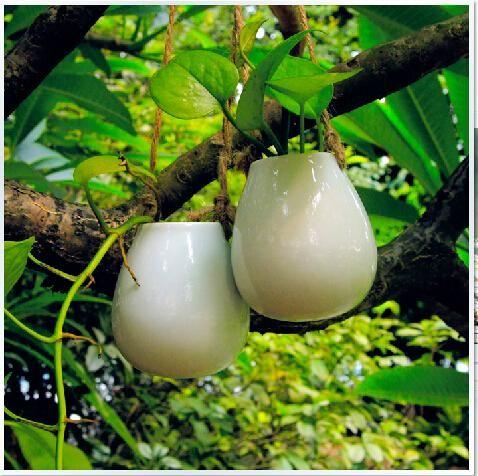 White Egg Shape Ceramic Hanging Planter,Ceramic Hanging Water Plant Ceramic Terrarium For Home Decoration Or Housewarming Gift Unique Glass Vases Unique Vases From Knikglass, $10.06| Dhgate.Com