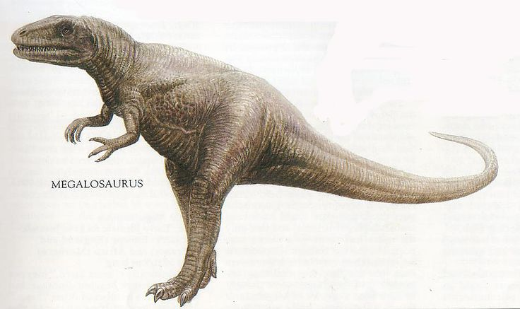 Did You Know that the first Dinosaur to be first discovered was Megalosaurus by William Buckland in 1824?