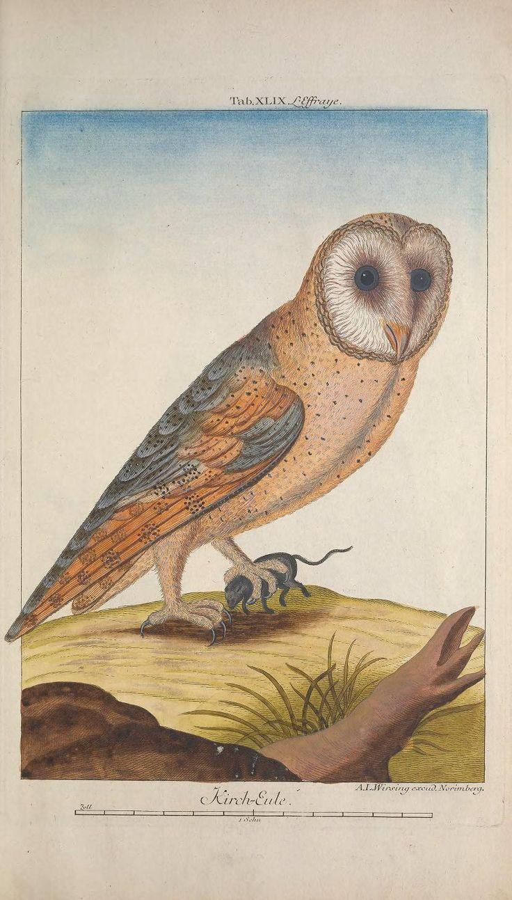 1768 | Volumes 8-9 | Recueil de divers oiseaux étrangers et peu communs By Georg Leonhart Huth,