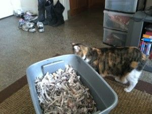 Make Your Own Kitty Litter for Pennies