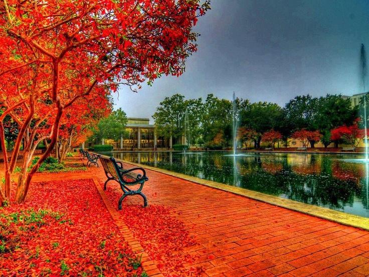Otoño en el campus de la Universidad del Sur de Carolina (USA)