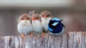 Resultado de imagen para aves hermosas en vuelo