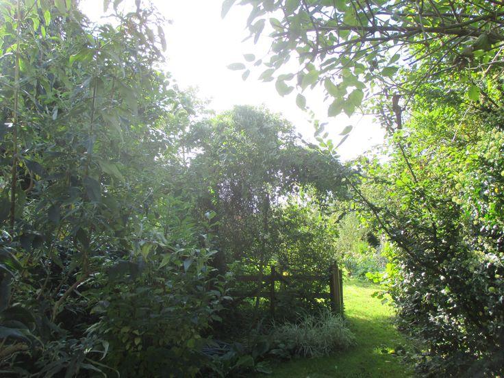 Vers le fond du jardin, octobre