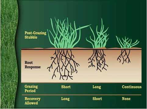 Rotational grazing diagram: Cattle Barn, Cattle Pasture, Goat Fence, Cow Fence, Goat Pasture, Farm Pasture, Cow Barn, Goat Fencing