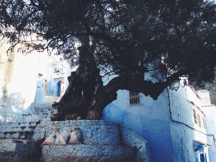 chefchaouen, morocco | Rosie. | VSCO Grid