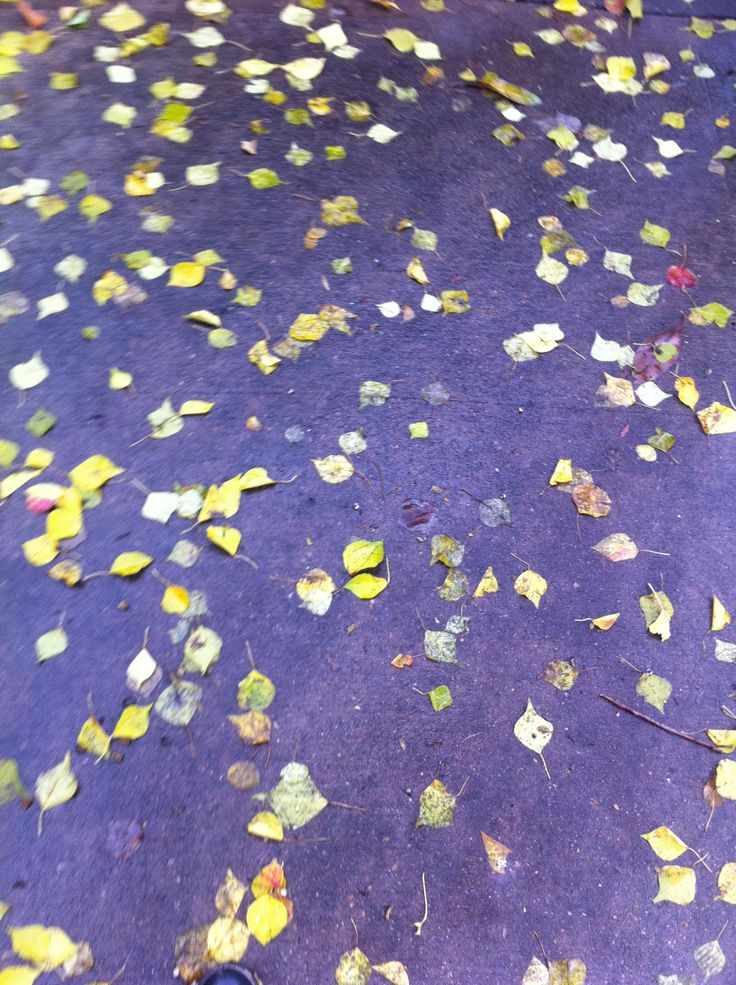Yet more leaves