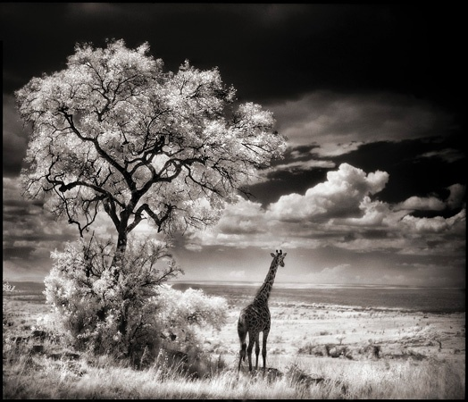 My favorite print by photographer nick brandt famous for his amazing photos of african wildlife