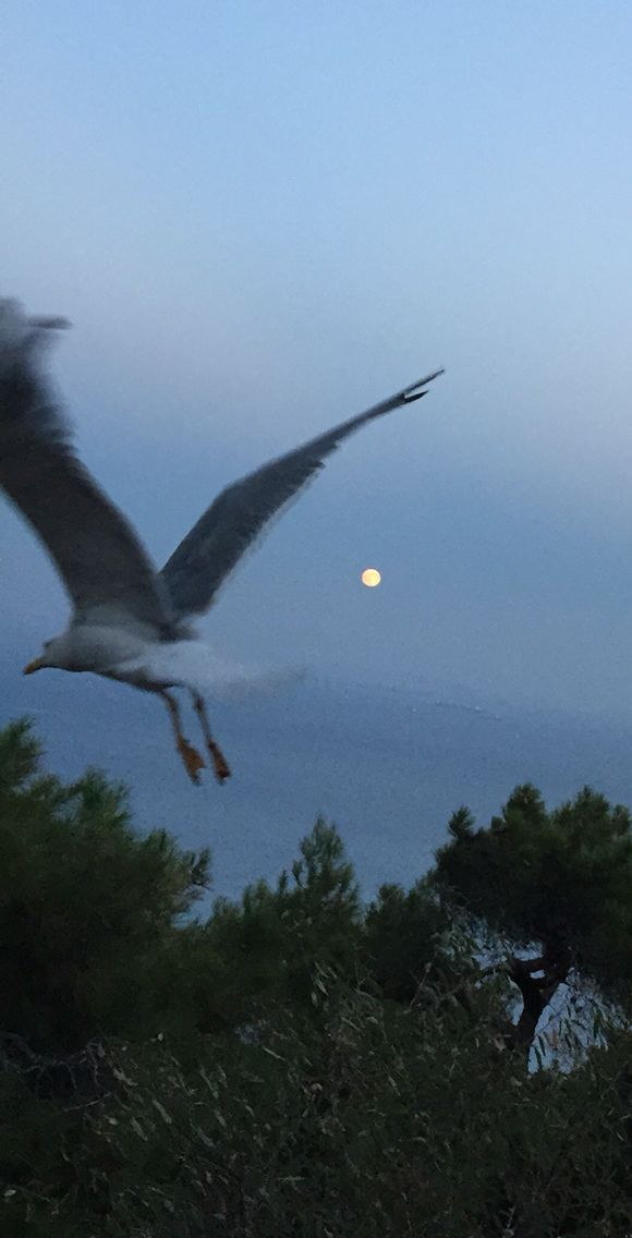 Dolunay'ın keyfini çıkarmak // Enjoying full moon at Aya Yorgi at Buyukada Istanbul.  #serguzestotel #serguzest #sermest #designhotels #butikotel #boutiquehotel #adakafasi #hotel #istanbul #buyukada #prinkipo #travel #traveling #travelgram #cokgezenlerkulubu #kucukotellerkitabi
