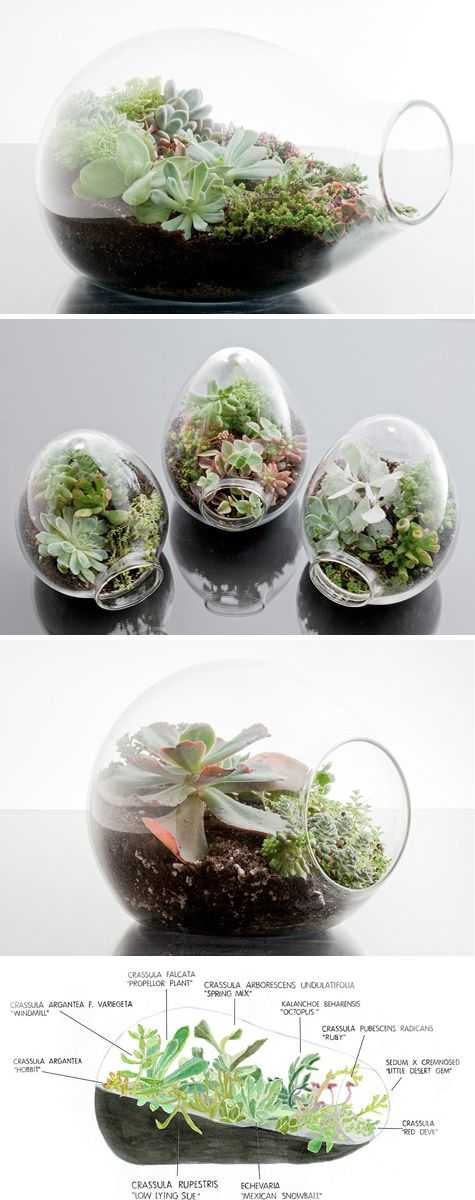 succulents terrarium - for the coffee table?