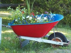 """recycled"" wheelbarrow used as a raised garden bed - Six Tips to Build a Cheap Raised Garden Bed (and why you need one)"